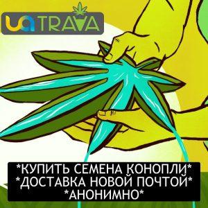 Интернет-магазин UATRAVA.com - Семена конопли